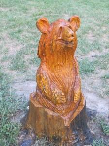closeup of bear